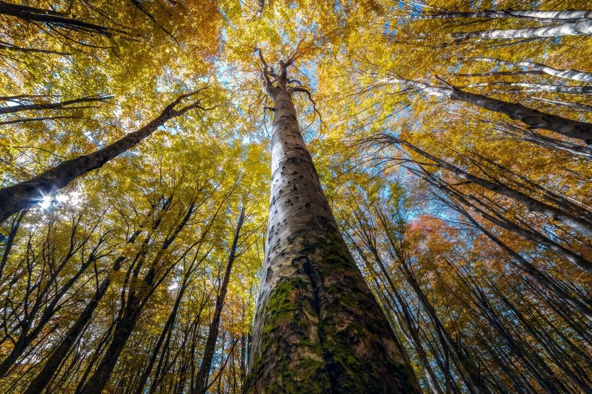 Photographer Captures the Stunning Beauty Of Looking Up At Trees In The Middle Of A Forest