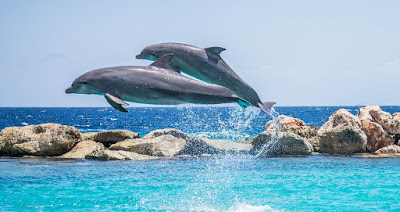 interesting facts about Dolphin