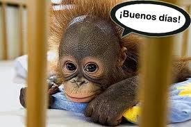 Frases de Buenos Dias con imagenes feliz dia