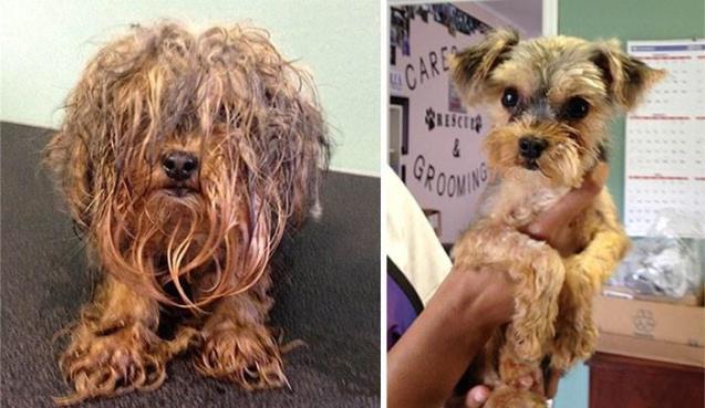 15 Historias de perros rescatados, antes y después.
