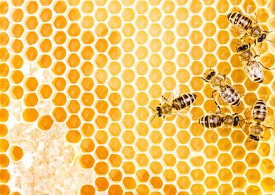 Honeycomb Beehive Hexagon