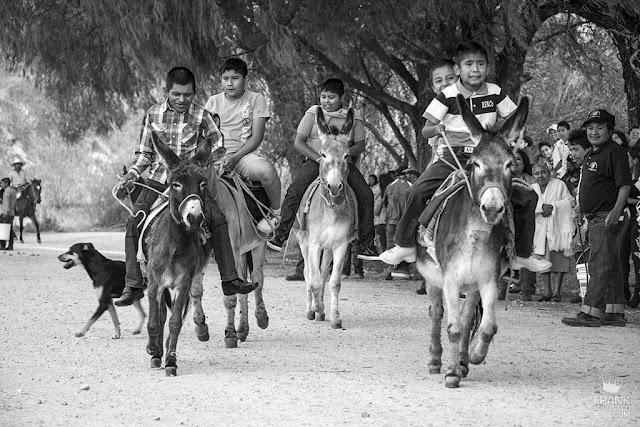 niños montando mulas