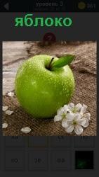 ответ на 3 уровень яблоко