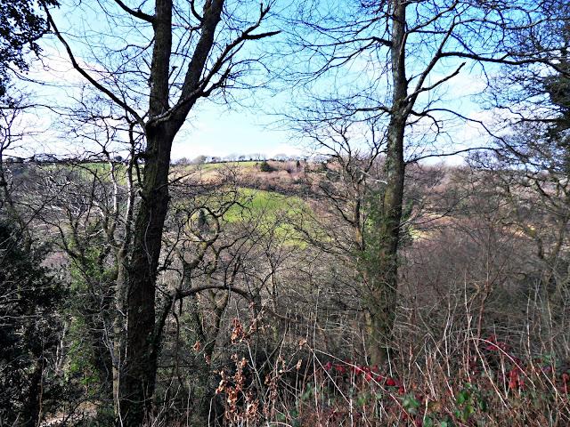Kings Wood, Pentewan, Cornwall