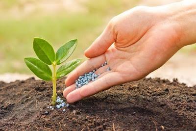 Phosphate Fertilizers Market