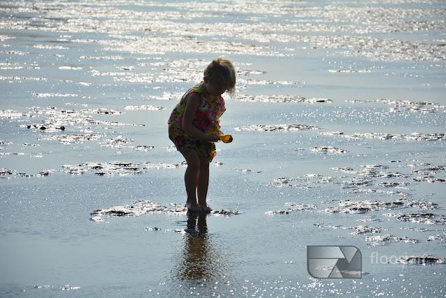 kraby na dnie Morza Wattowego