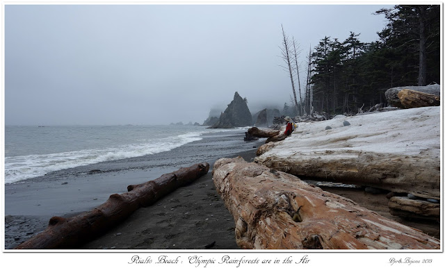 Rialto Beach: Olympic Rainforests are in the Air
