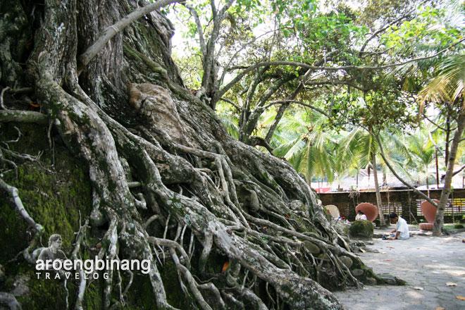 pohon tua pantai karang bolong anyer serang