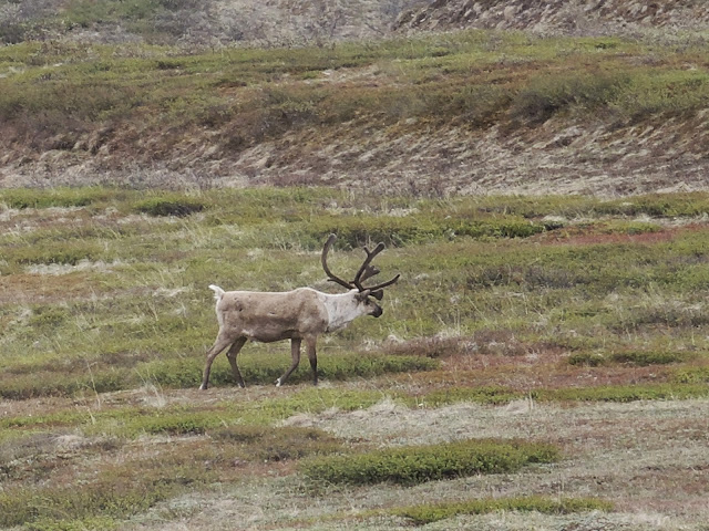 Denali national park 15