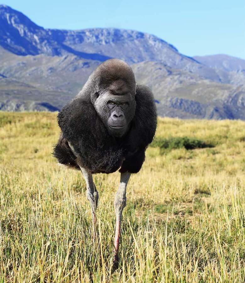 05-Ostrich-Gorilla-AOG-Fredriksen-Animal-Art-www-designstack-co