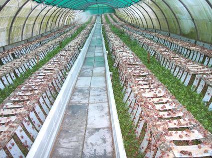 Sistema de procesos en la cr a de caracoles como hacer un for Como hacer un criadero de cachamas