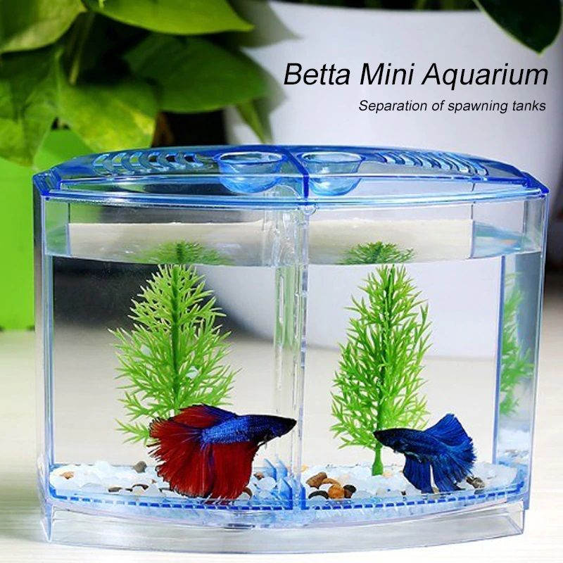 Photo The One Thing to Do for How Long Can a Betta Fish Live in a Fishbowl