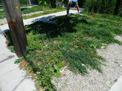 King West Village Toronto front garden clean up before by Paul Jung Gardening Services