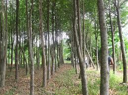 <alt img src='gambar.jpg' width='100' height='100' alt='pohon gaharu'/>