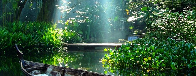 jungle stream in early morning at spice gardens