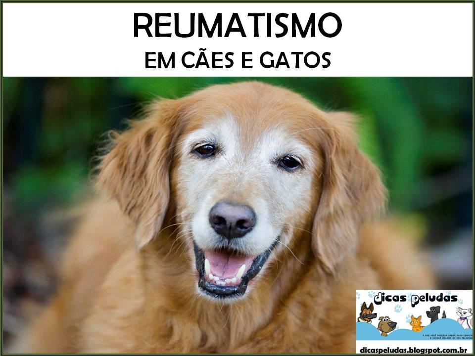 Reumatismo é um termo não-específico para uma variedade de doenças como a  febre reumática 5784b00384c