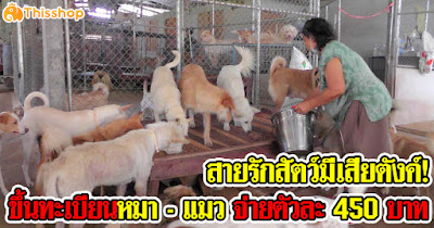 สายรักสัตว์มีเสียตังค์! ขึ้นทะเบียนหมา - แมว จ่ายตัวละ 450 บาท