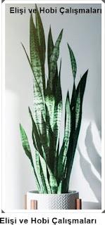 Işığa İhtiyaç Olmadan Yetişen Salon Bitkileri nelerdir?  Bakımı 9