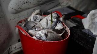 Μάλτα: Έβρεξε χιλιάδες ψάρια και ήταν ολοζώντανα. Βίντεο
