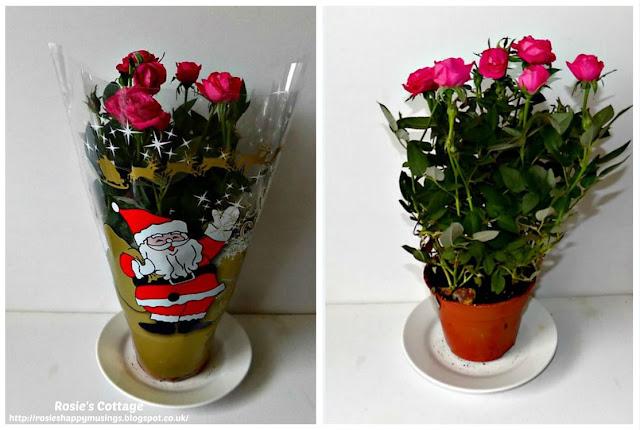 Perfect Miniature Roses