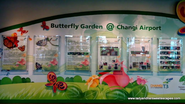 Butterfly Garden at Terminal 3, Changi Airport Singapore