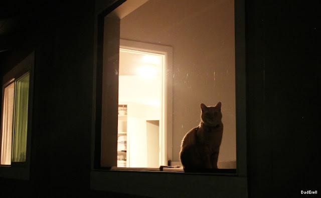 Chat à la fenêtre la nuit