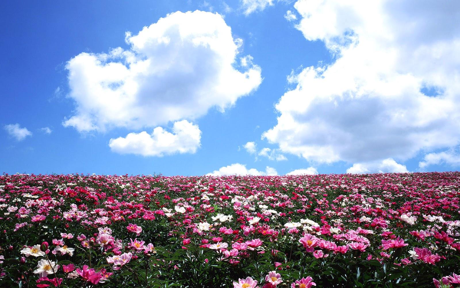 Flowers Wallpapers Flower Wallpaper ~ Top Best HD Wallpapers for Desktop