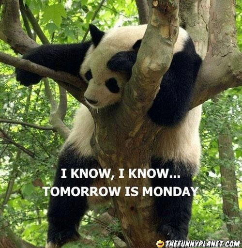 Let's Celebrate!: Tomorrow is Monday Funny Images and Pictures