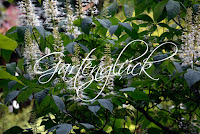 Gartenglück, Zierkastanie, Kastanie