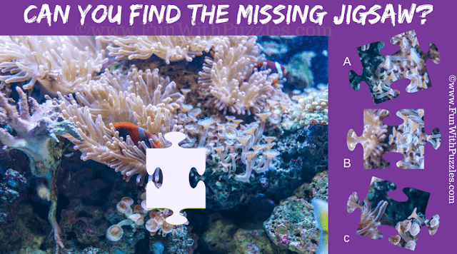 This is Jigsaw Puzzle for Adults in which one has to find the missing Jigsaw Piece taken from picture of Deep Reef