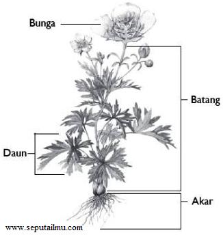Pengertian, Bagian-Bagian, dan Fungsi Organ Pada Tumbuhan