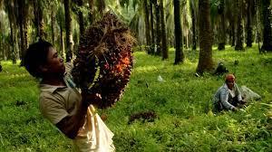 Aspek Perlindungan Hukum Dan Kesejahteraan Sosial Ekonomi Buruh Perkebunan Kelapa Sawit Di Indonesia
