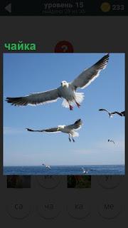 Над бескрайнем морем в небе порхают несколько белых чаек