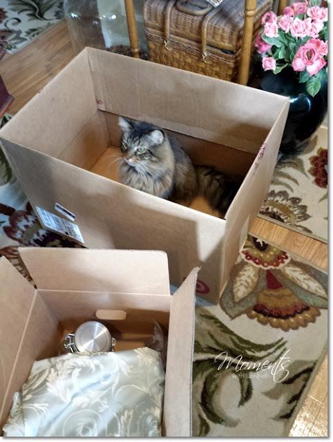 Jasper in a moving box.