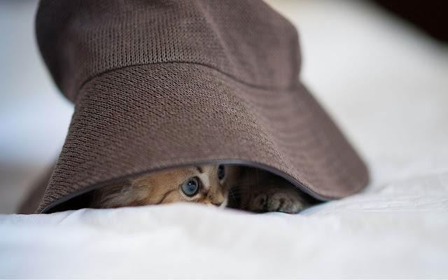 Katje onder een hoed