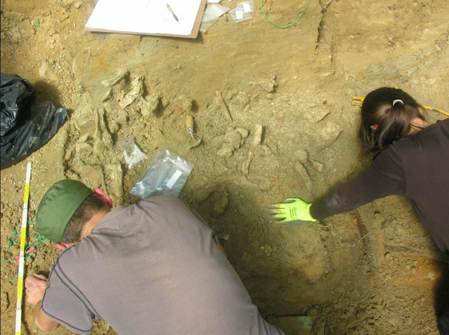 First evidence in Europe that man was hunting mammoths discovered