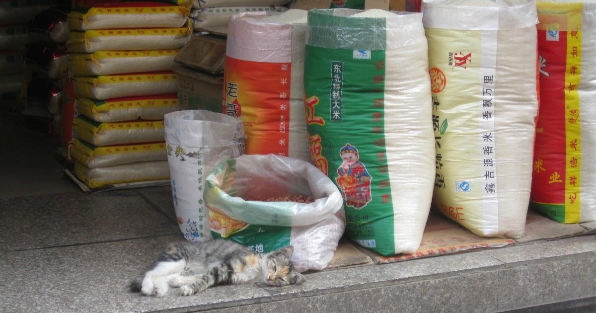 China trip #3 - due giorni a Xian