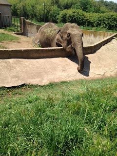 Zoo de fréjus - éléphante d'Asie