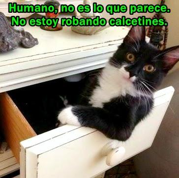gato-ladron-roba-calcetines