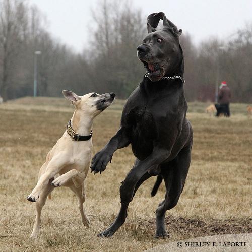 Kelvin Black: Most Dangerous Dogs In The World