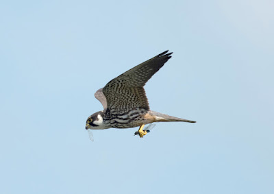 Hobby by Jason Thorpe