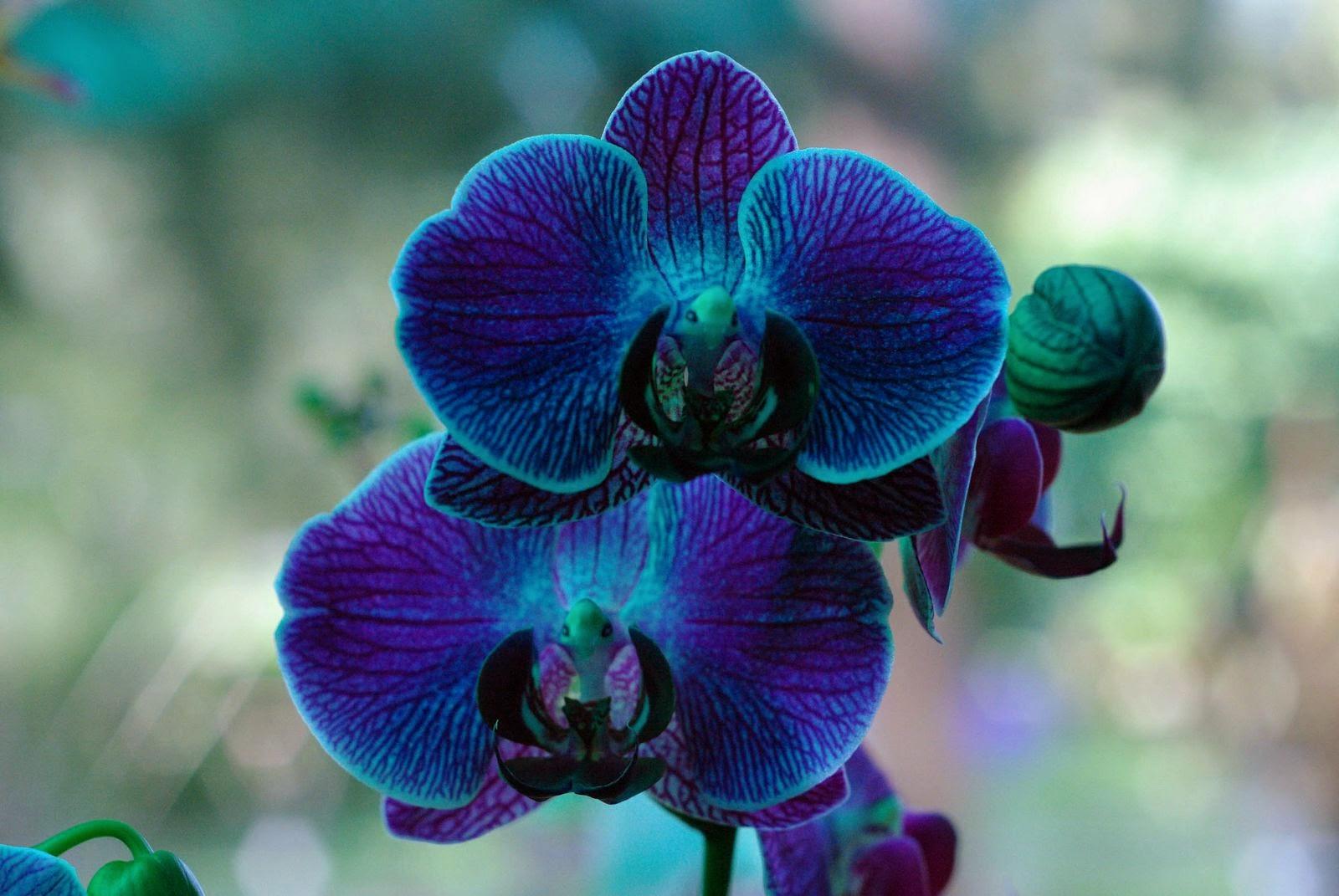 la historia de las orqu deas y su mensaje crisol life On como cuidar una orquidea azul