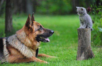 Perros y Gatos, dogs and cats