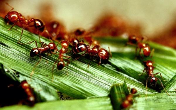5 Fakta Unik Tentang Hewan Semut