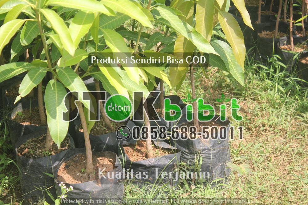 Langkah-langkah Agar Tanaman Durian Cepat Berbuah    Grosir     berkualitas