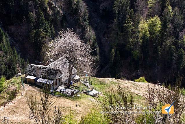 Alpe Caulin