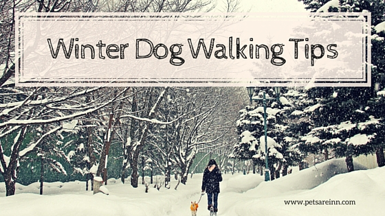 Dog Walking Winter