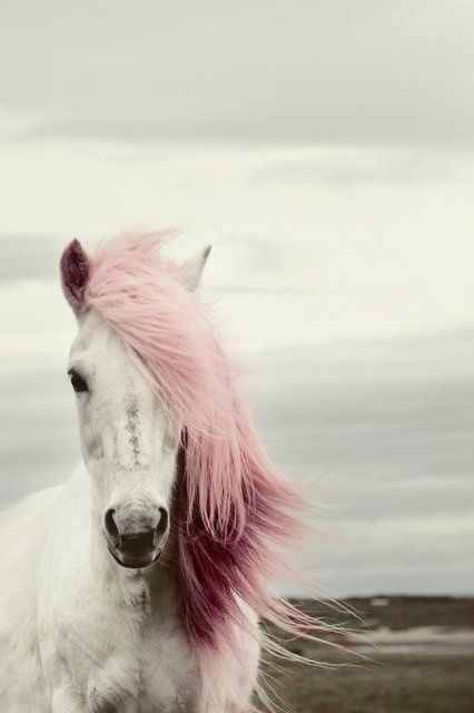 A Lipizzaner horse with un touch pink | Olivier Krug by Telegraph UK