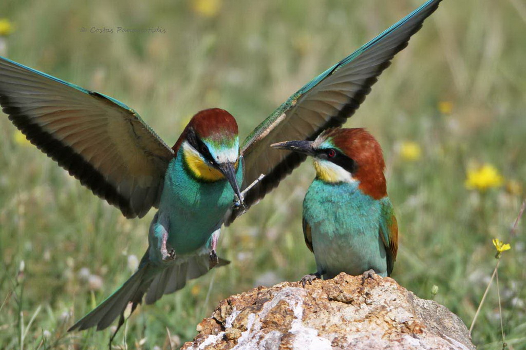 Πώς να μεγαλώσει μεγάλο πουλί