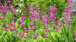 Morton Hall Gardens Tulip Festival